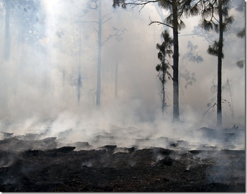 Forest Fire Ashes