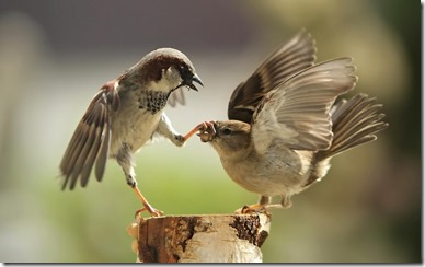 Just shut your beak!